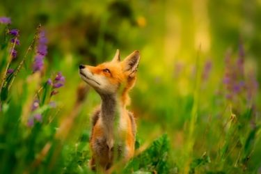 実は自信を失う「虎の威を借る狐」・権威づけにご用心